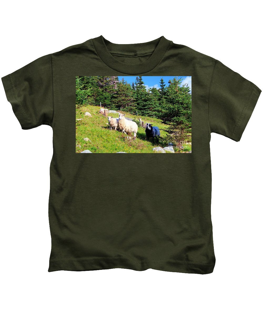 Ram And Ewes Kids T-Shirt featuring the photograph Ram And Ewes by Barbara Griffin