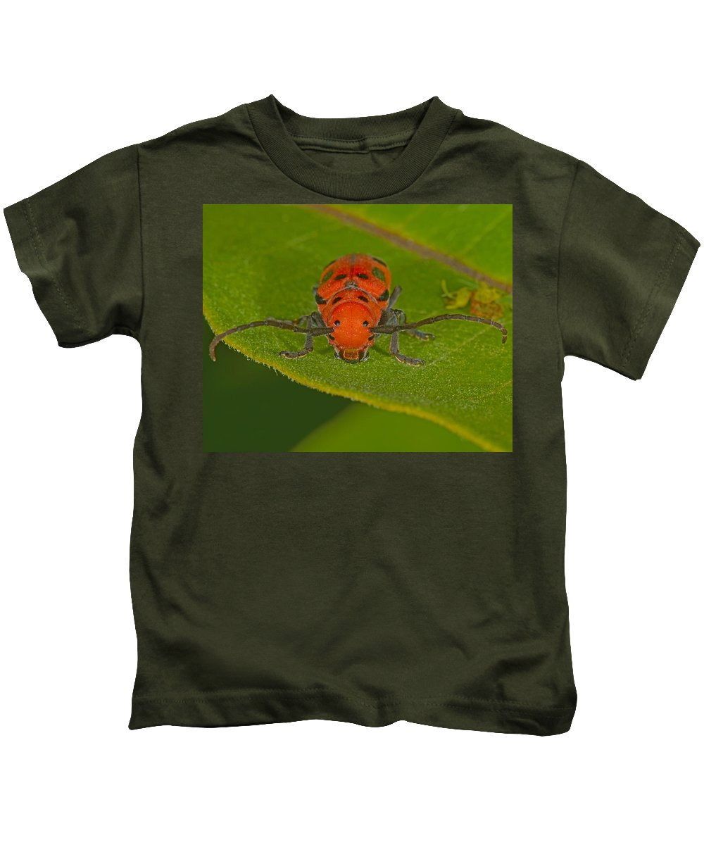 Tetraopes Tetrophthalmus Kids T-Shirt featuring the photograph Red Milkweed Beetle by Tony Beck