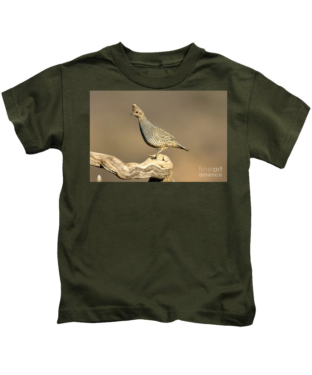Animal Kids T-Shirt featuring the photograph Scaled Quail Callipepla Squamata by Anthony Mercieca
