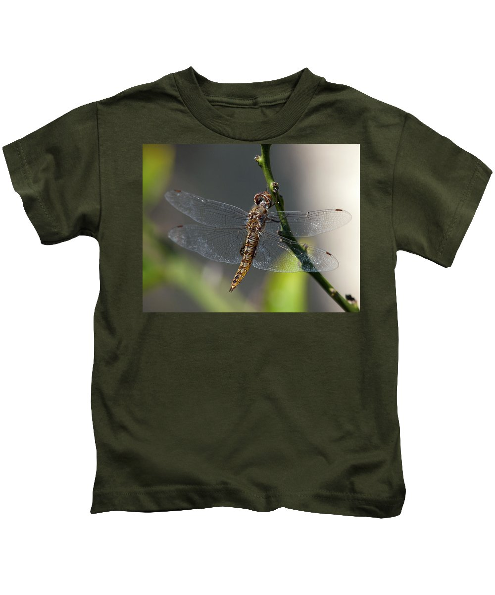 Dragonfly Kids T-Shirt featuring the photograph Soaking Rays by Joe Schofield