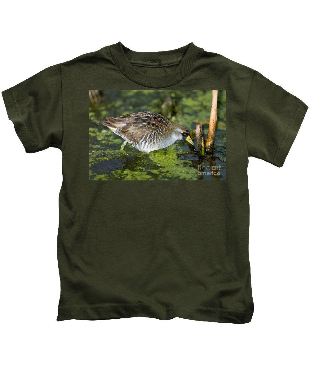 Animal Kids T-Shirt featuring the photograph Sora Rail Porzana Carolina In Algae by Anthony Mercieca