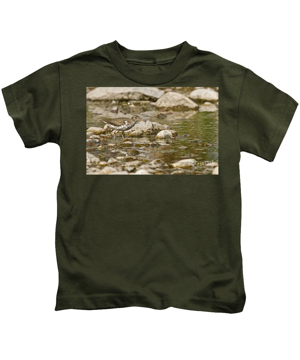 Spotted Sandpiper Kids T-Shirt featuring the photograph Spotted Sandpiper Pictures 36 by World Wildlife Photography