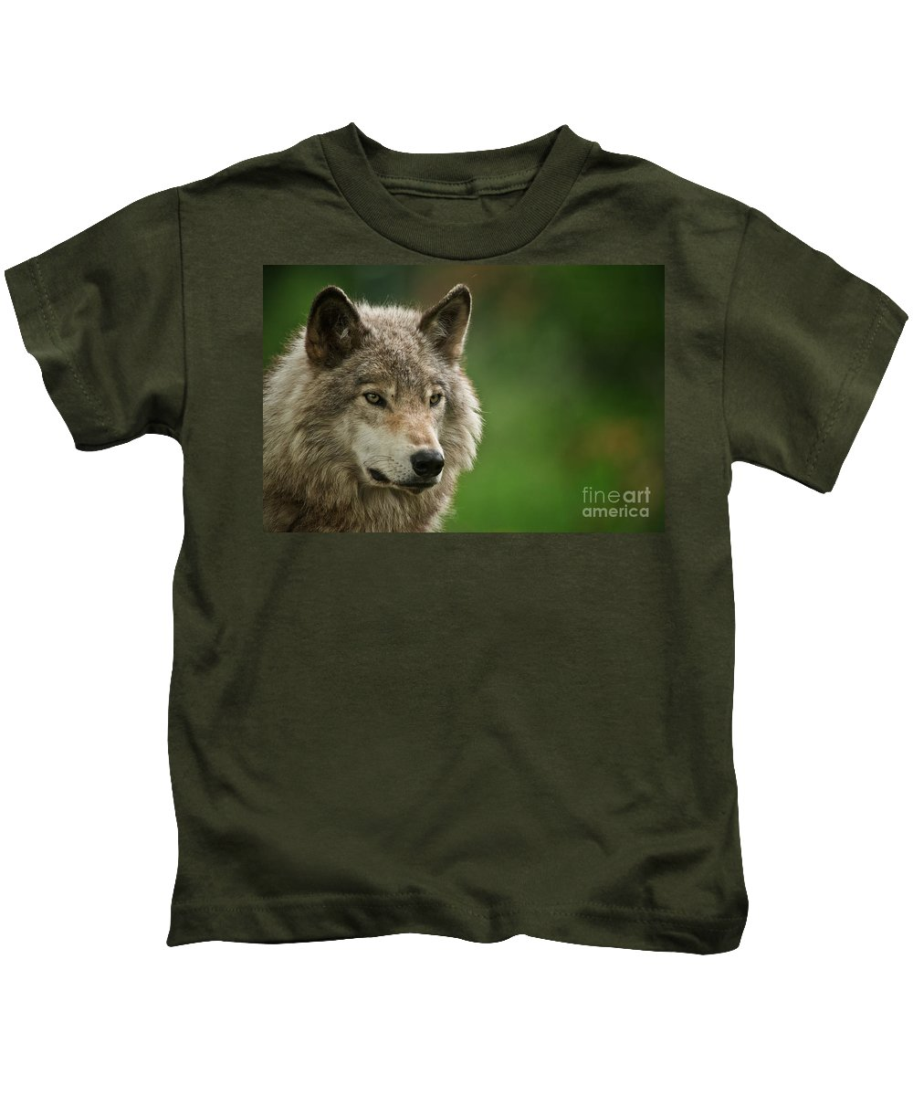 Timber Wolf Kids T-Shirt featuring the photograph Timber Wolf Pictures 261 by Wolves Only