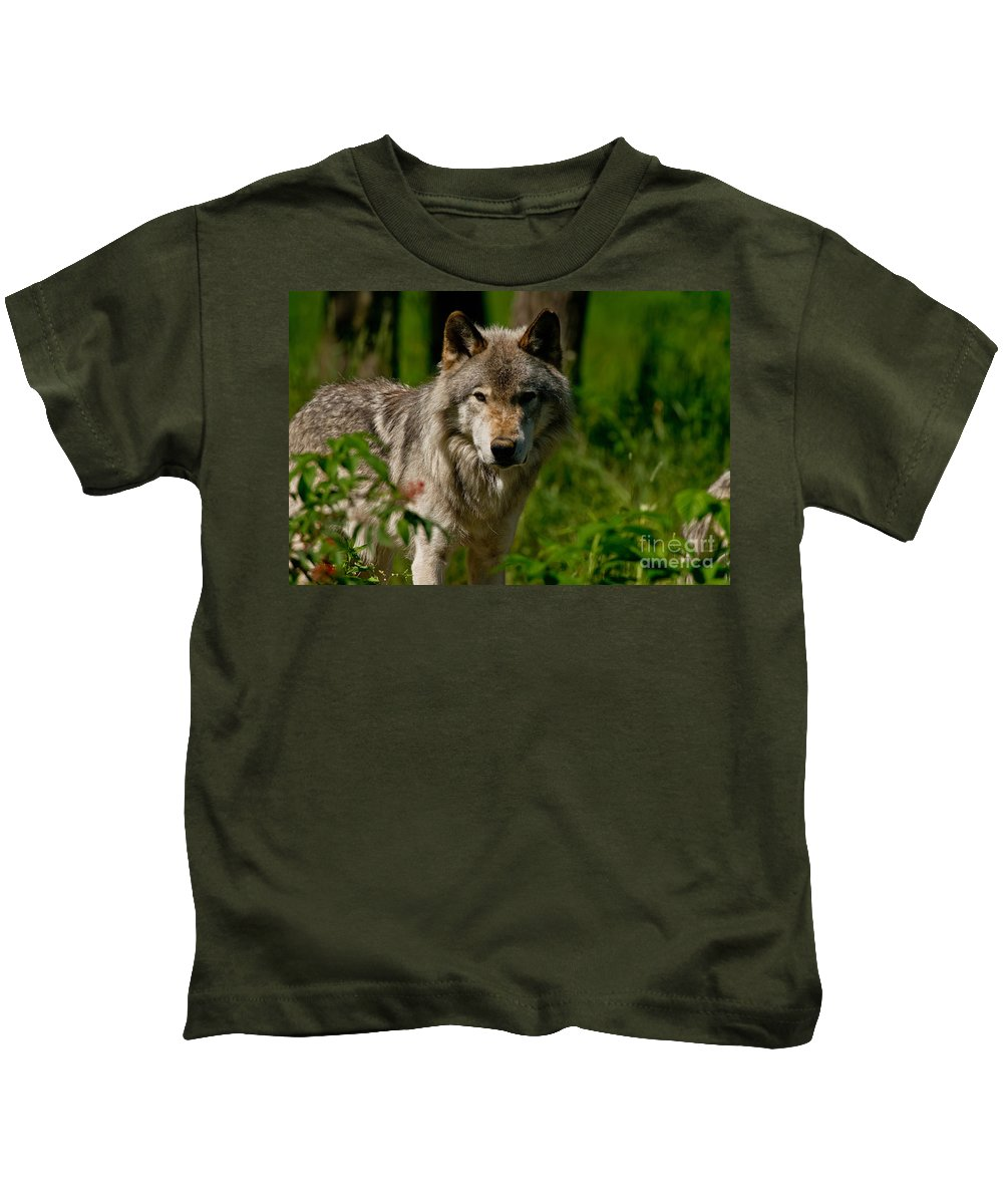 Timber Wolf Kids T-Shirt featuring the photograph Timber Wolf Pictures 266 by Wolves Only