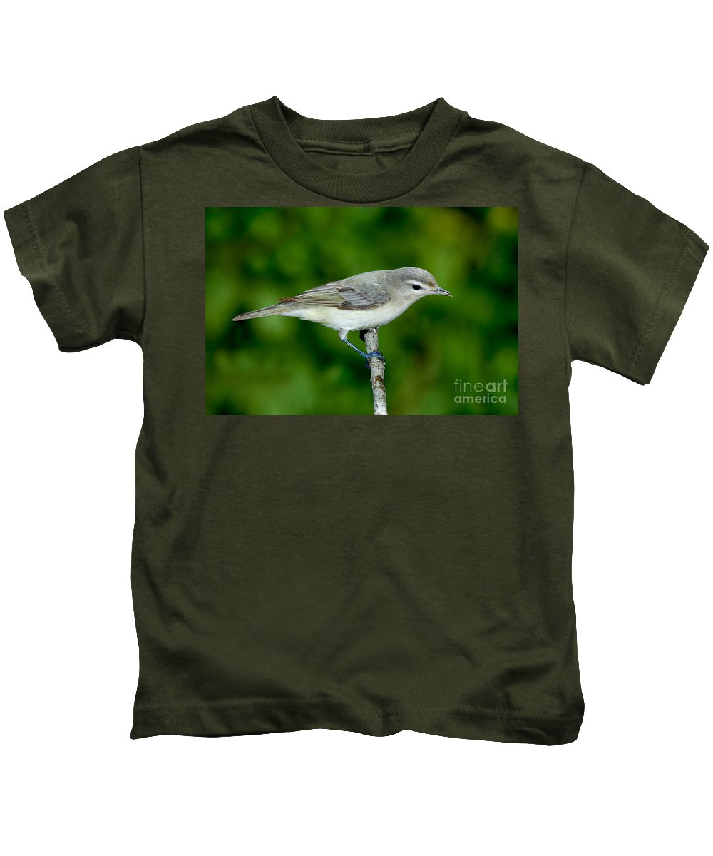 Fauna Kids T-Shirt featuring the photograph Warbling Vireo Vireo Gilvus by Anthony Mercieca