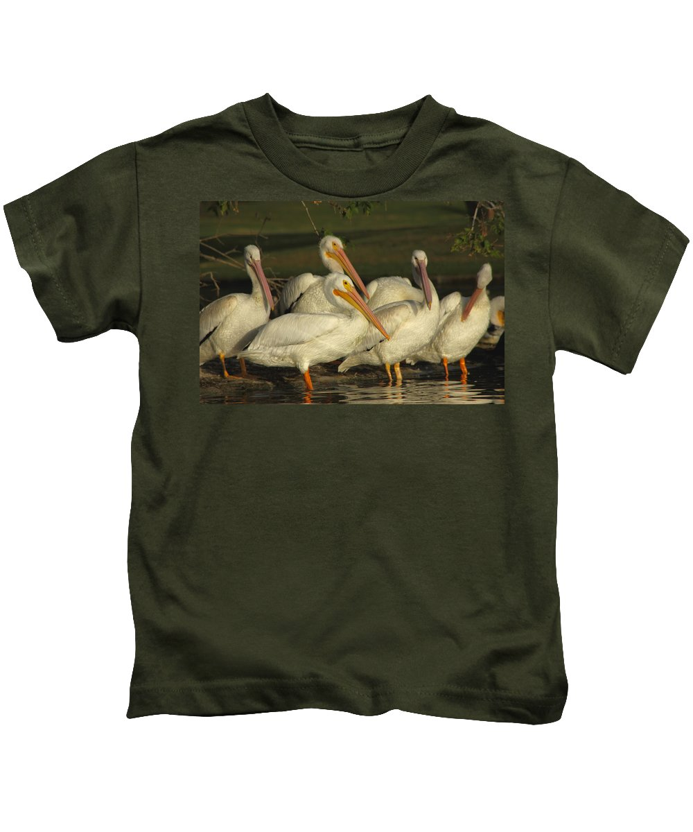 White Pelicans Kids T-Shirt featuring the photograph White Pelicans by Diana Haronis