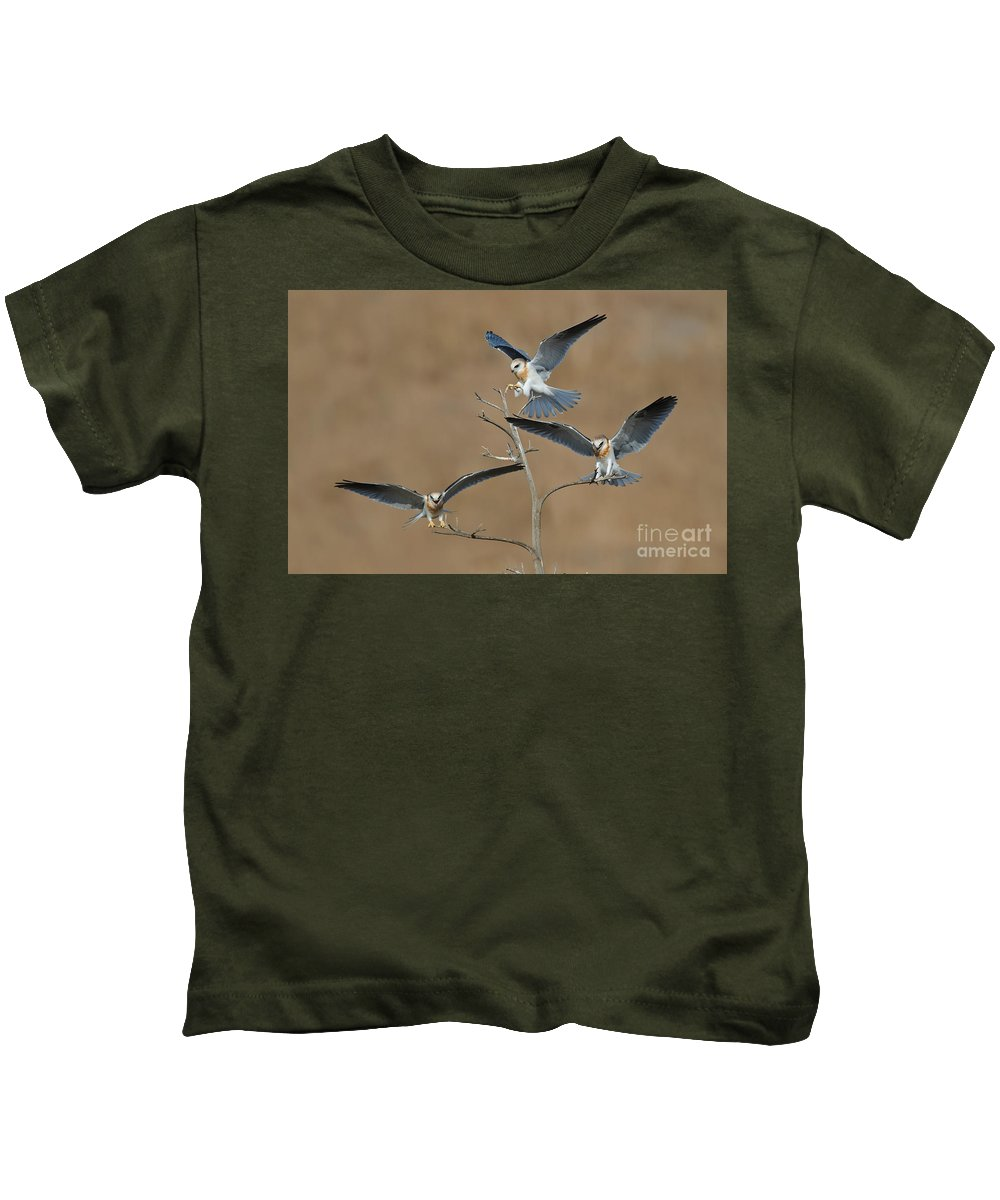 Animal Kids T-Shirt featuring the photograph White-tailed Kite Young by Anthony Mercieca