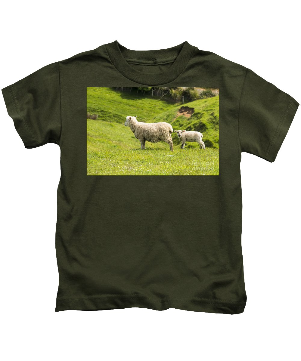 New Zealand Sheep Lamb Lambs Grass Grasses Animal Animals Creature Creatures Landscape Landscapes Kids T-Shirt featuring the photograph Who's Coming To Dinner by Bob Phillips