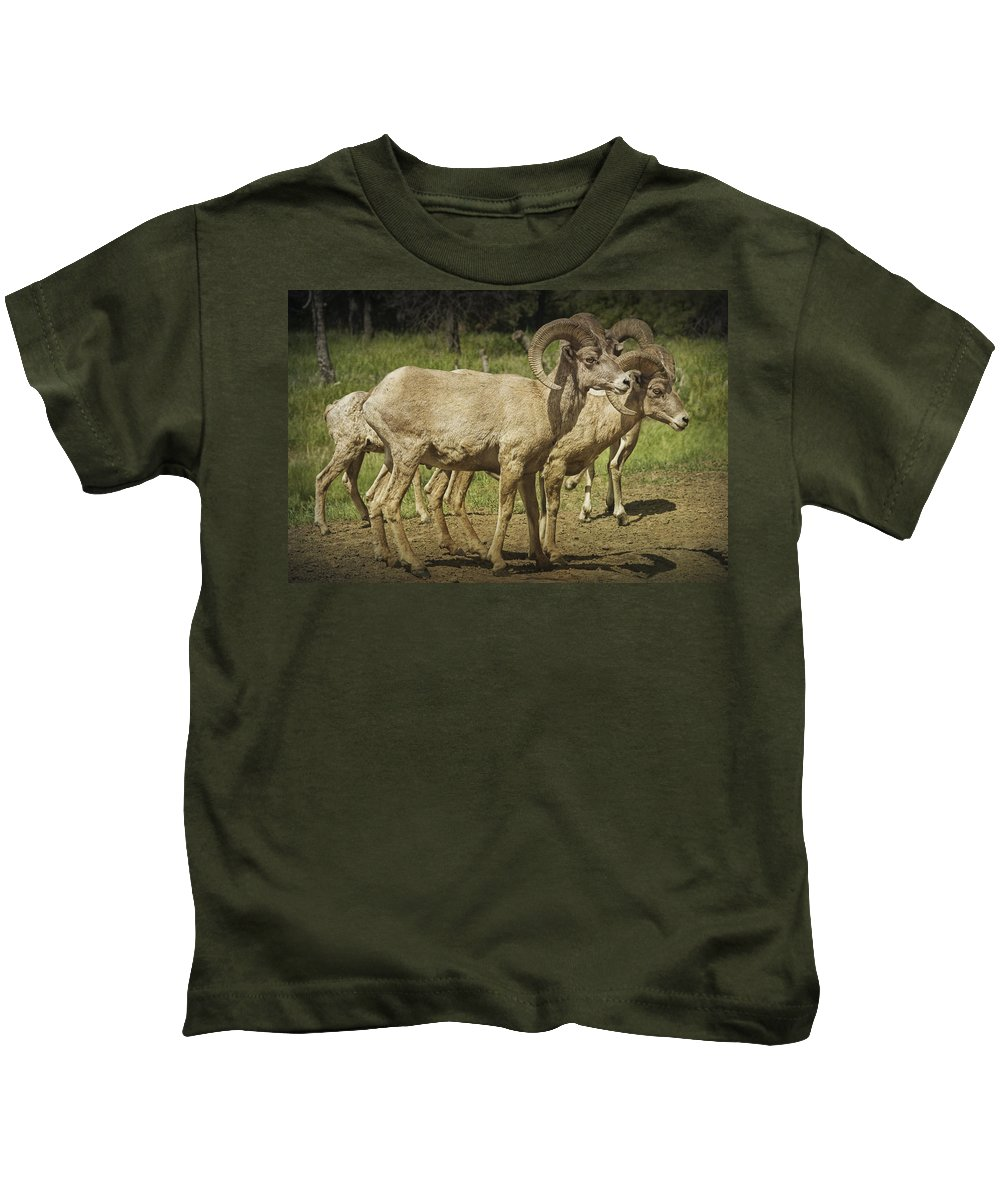 Art Kids T-Shirt featuring the photograph Bighorn Sheep Along A Roadside In The Black Hills by Randall Nyhof