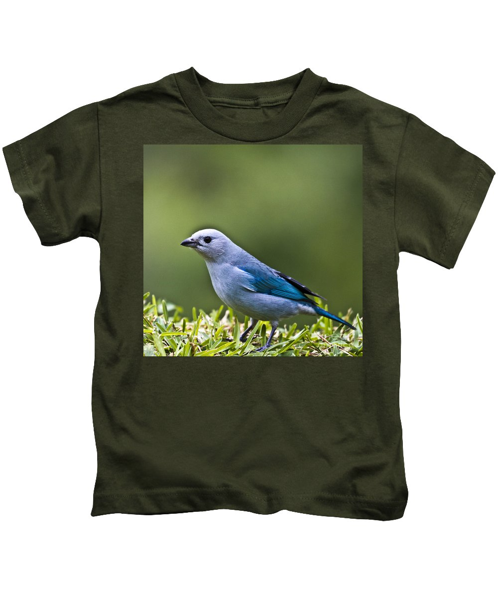 Tanager Kids T-Shirt featuring the photograph Blue-grey-tanager by Heiko Koehrer-Wagner