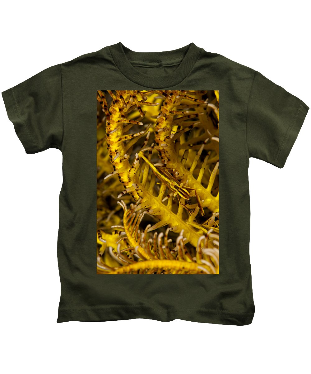 Amboinensis Kids T-Shirt featuring the photograph Commensal Shrimp by Dave Fleetham
