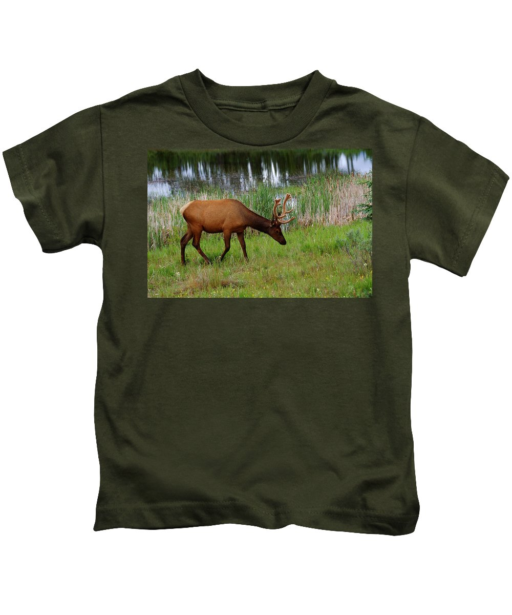 Bogs Kids T-Shirt featuring the photograph Elk Cervus Elaphus Jasper National by Mike Grandmailson