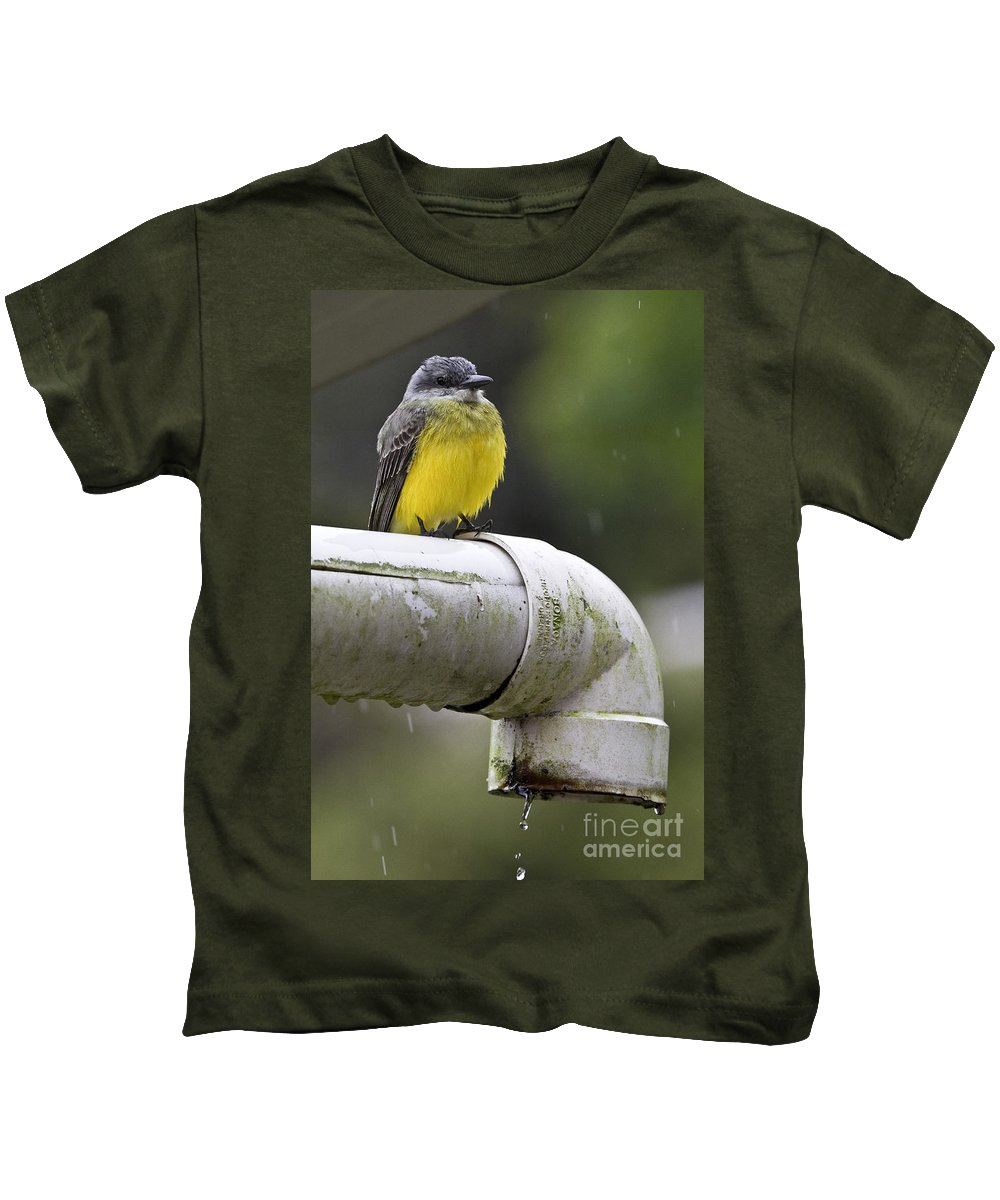 Grey-capped Flycatcher Kids T-Shirt featuring the photograph Grey-capped Flycatcher by Heiko Koehrer-Wagner