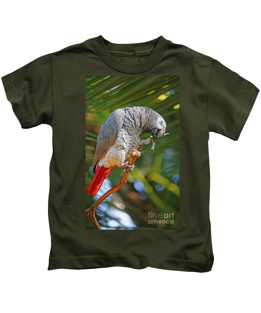 Birds Kids T-Shirt featuring the photograph Grey Parrot by Randy Harris