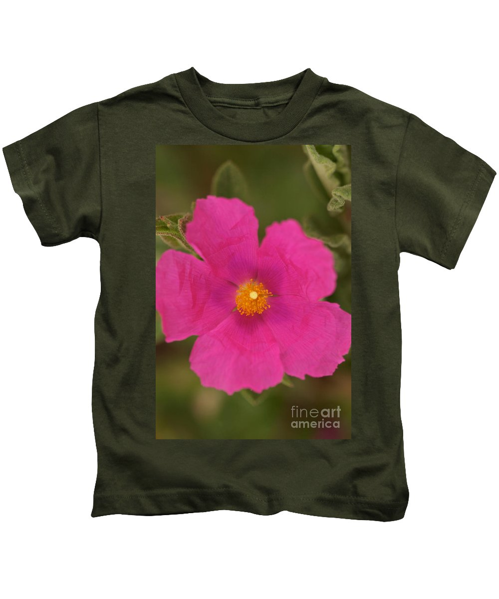 Pink Cosmo Photographs Kids T-Shirt featuring the photograph Hot Pink by Brooke Roby