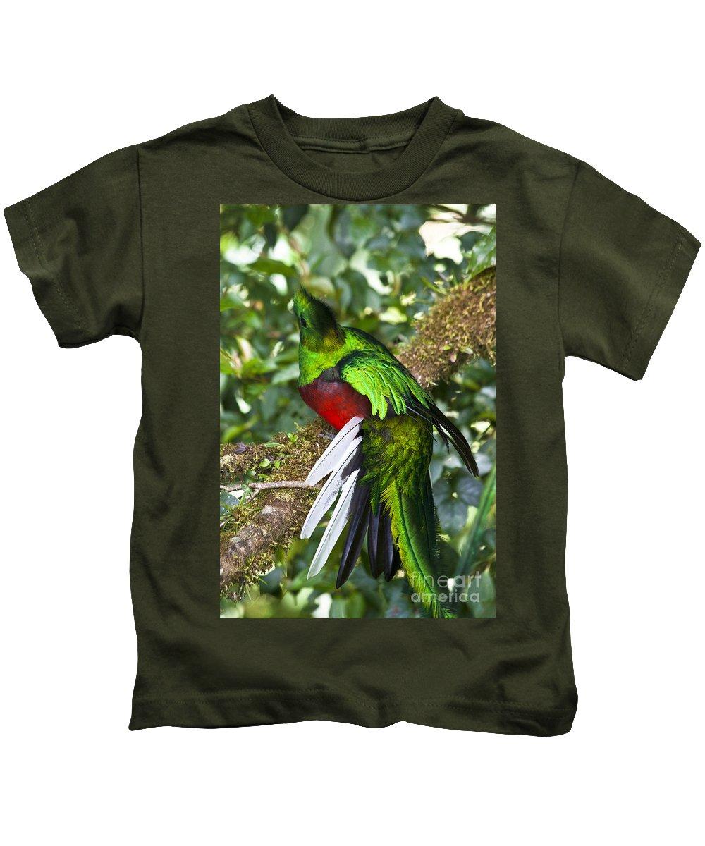 Bird Kids T-Shirt featuring the photograph Male Resplendent Quetzal by Heiko Koehrer-Wagner