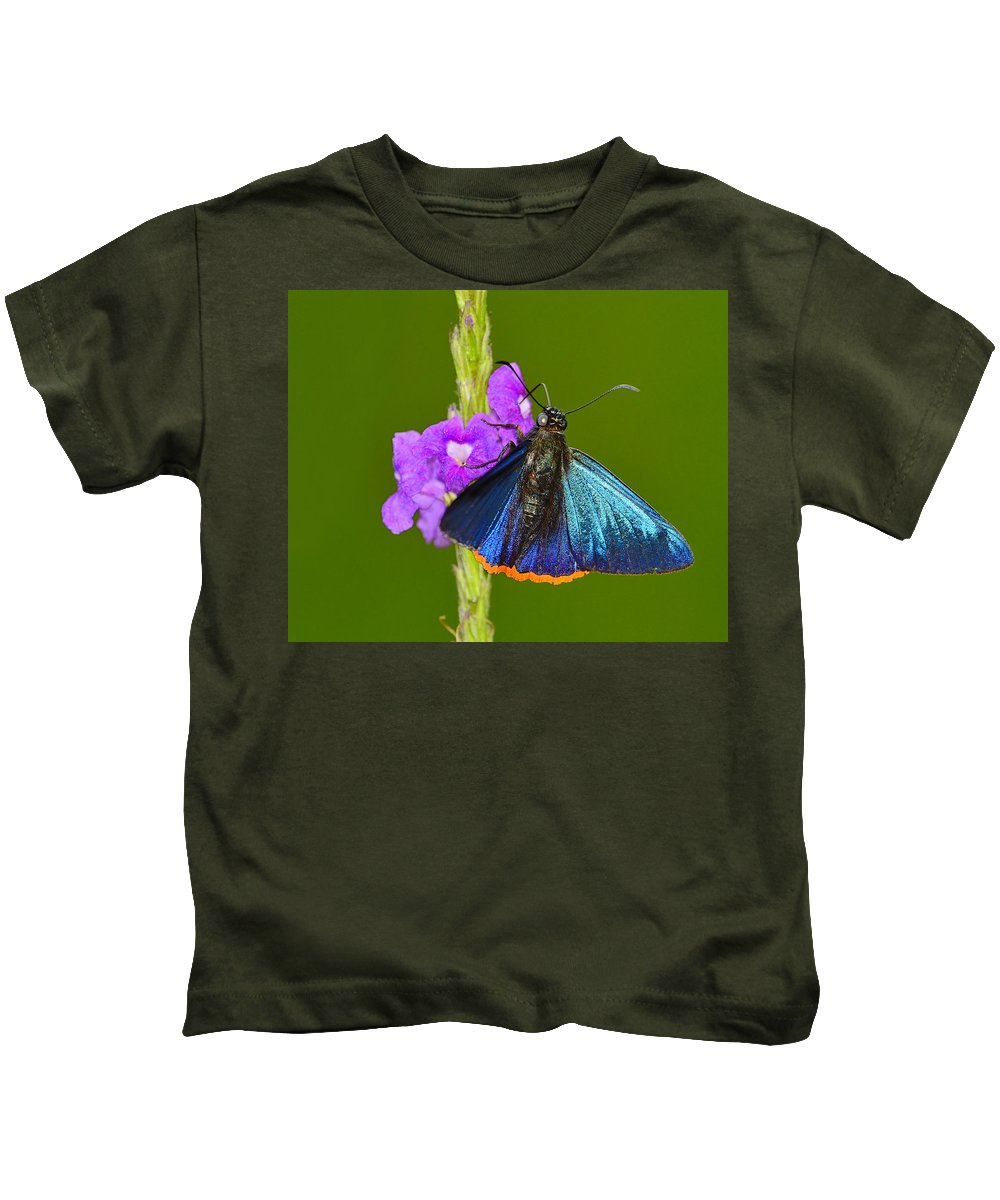 Chalypyge Chalybea Kids T-Shirt featuring the photograph Orange-rimmed Firetip by Tony Beck