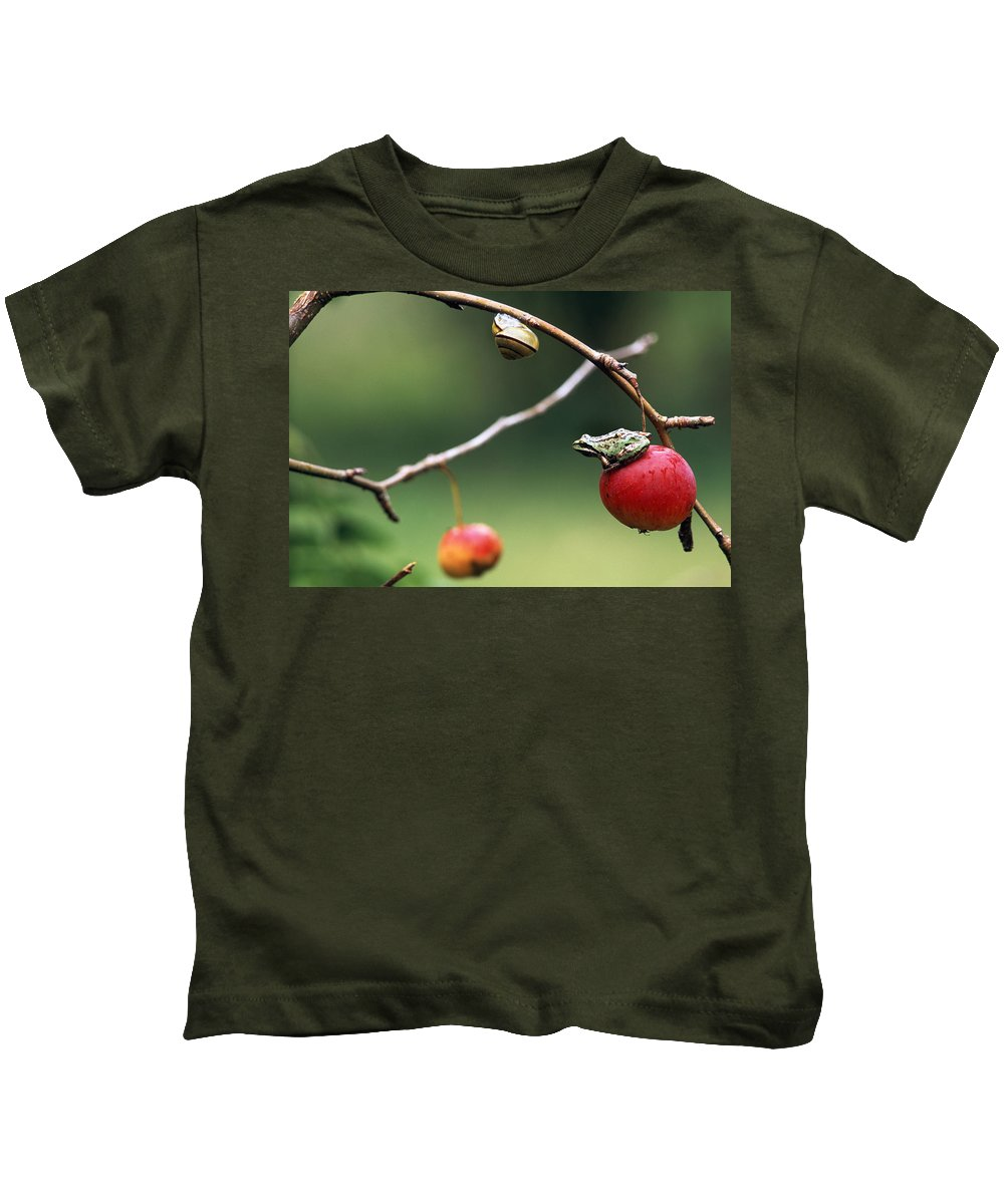 Color Images Kids T-Shirt featuring the photograph Pacific Tree Frog On A Crab Apple by David Nunuk