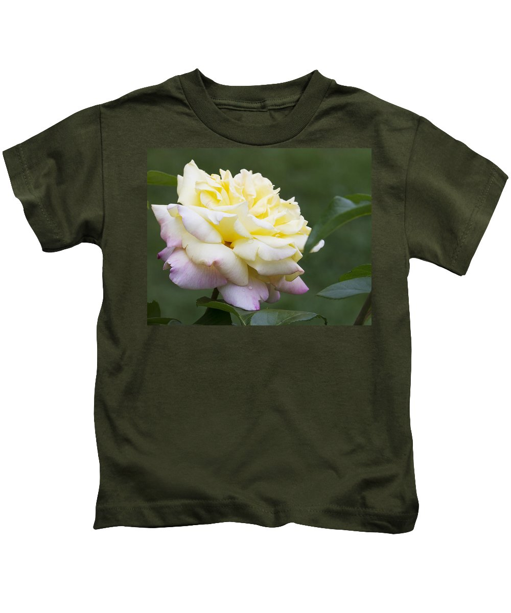 Rose Kids T-Shirt featuring the photograph Peace Rose by Kathy Clark