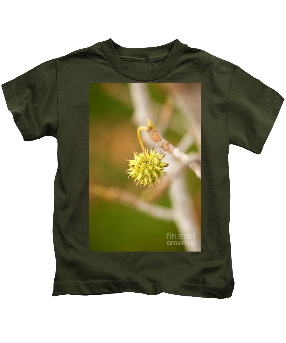 Sycamore Tree Photographs Kids T-Shirt featuring the photograph Seed Pod On Sycamore Tree by Brooke Roby