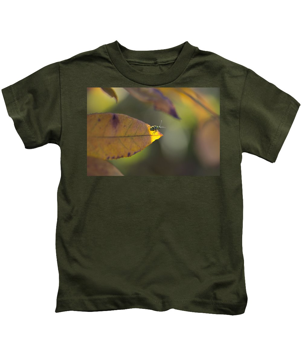 Spotted Cucumber Beetle Kids T-Shirt featuring the photograph Sunlight On The Tip by Douglas Barnard