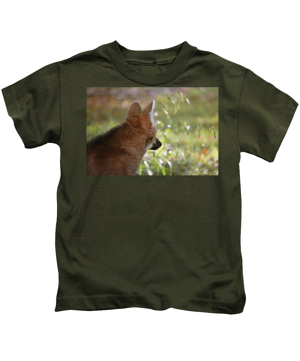 Wolf Kids T-Shirt featuring the photograph Wondering Wolf by Karol Livote