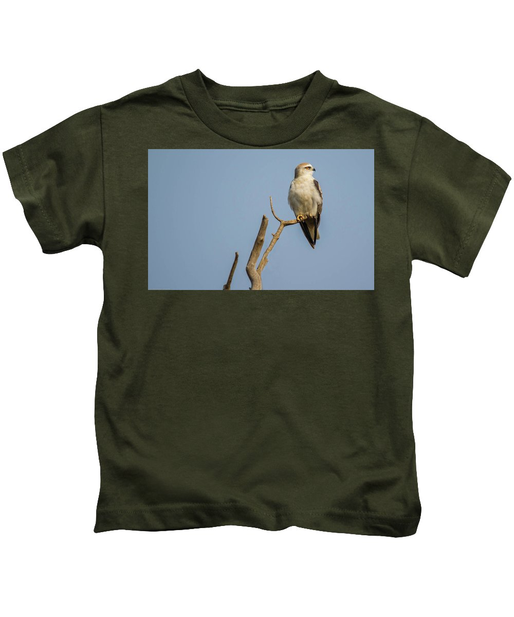 Kite Kids T-Shirt featuring the photograph Black Winged Kite by Manjot Singh Sachdeva