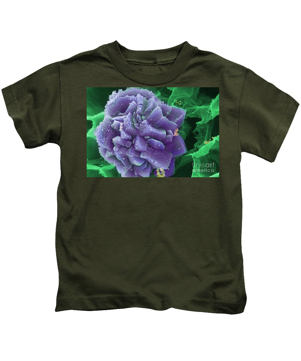 Biological Kids T-Shirt featuring the photograph Calcium Oxalate Crystal In Cannabis, Sem by Ted Kinsman