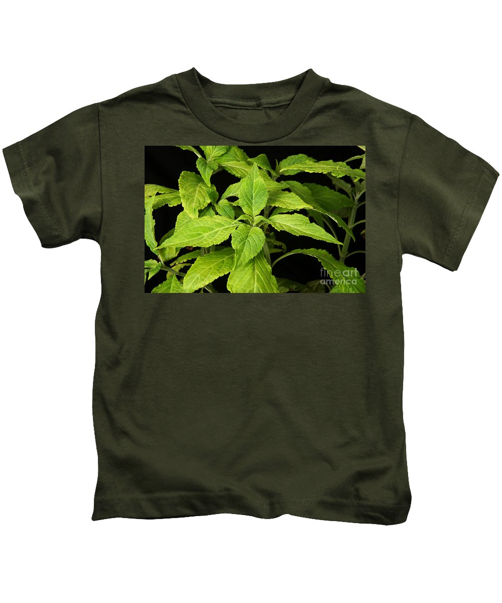 Plant Kids T-Shirt featuring the photograph Diviners Sage by Ted Kinsman