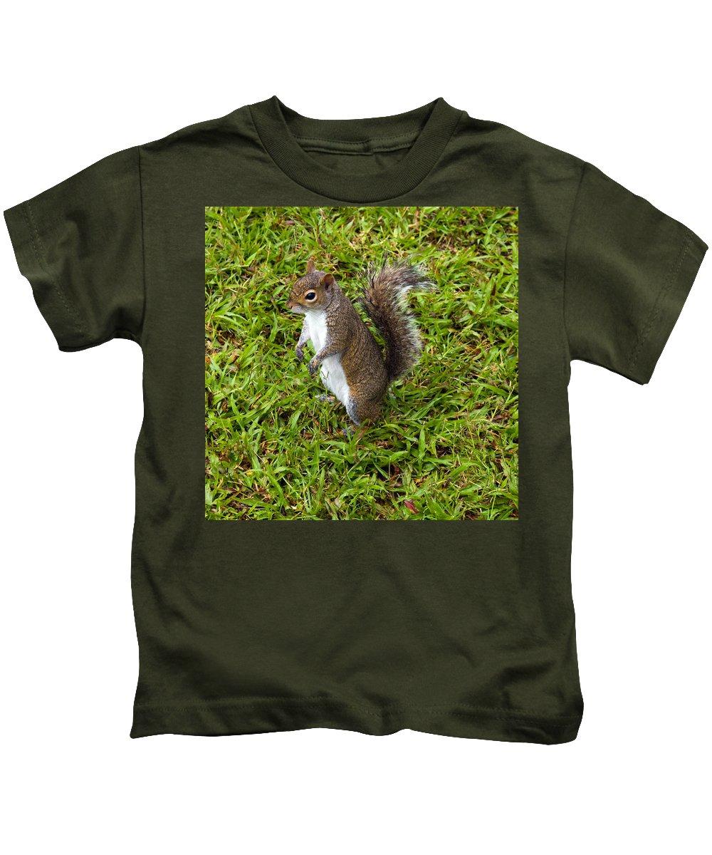 Squirrel; Eastern; Gray; Sciurus; Carolinensis; Swarm; Food; Florida; Eau; Gallie; Melbourne; Park; Kids T-Shirt featuring the photograph Eastern Gray Squirrel by Allan Hughes