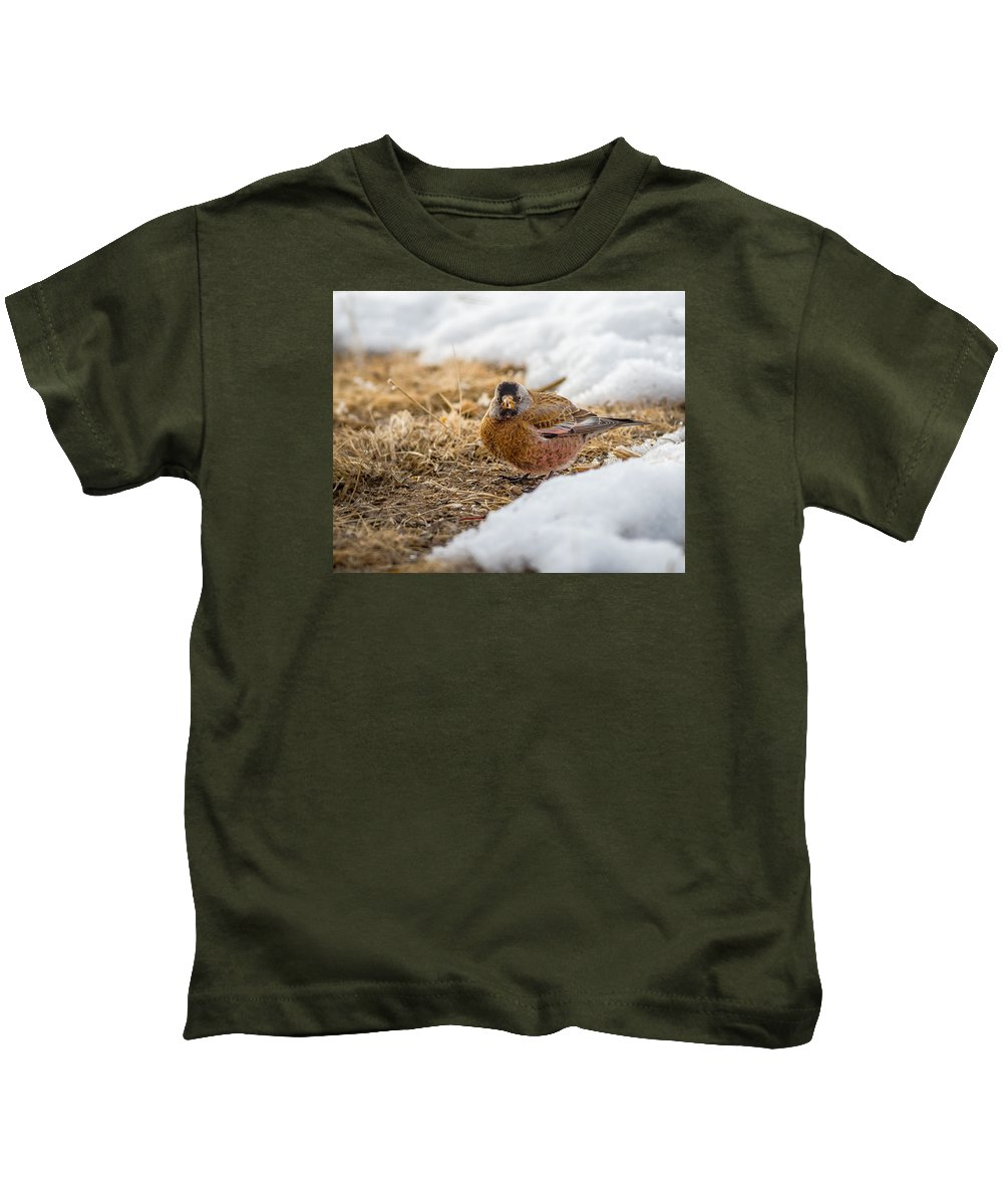 Gray Capped Rosy Finch Kids T-Shirt featuring the photograph Gray Capped Rosy Finch In The Snow by John Brink