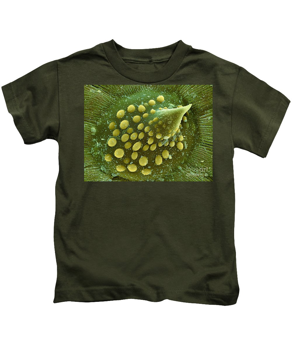 Science Kids T-Shirt featuring the photograph Hops Leaf, Sem by Ted Kinsman