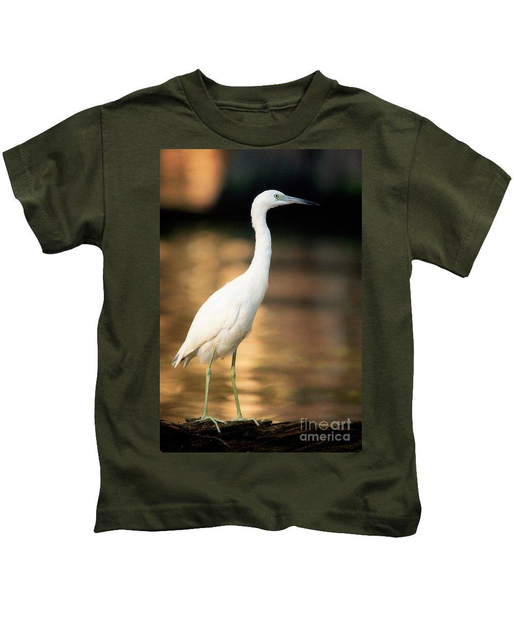 Immature Little Blue Heron Kids T-Shirt featuring the photograph Immature Little Blue Heron by Matt Suess