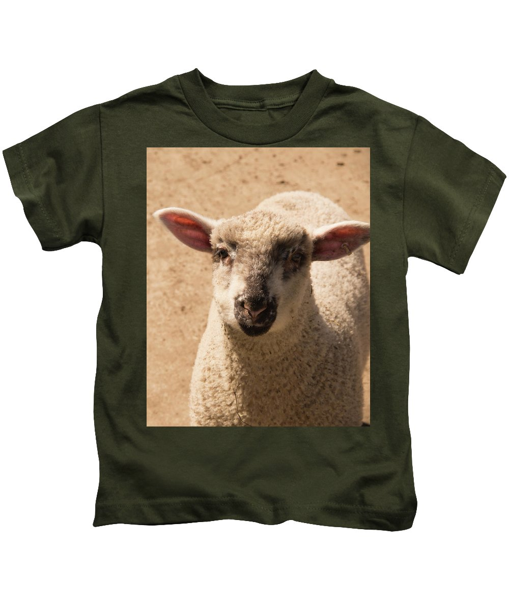 Sheep Kids T-Shirt featuring the photograph Lamb Looking Cute. by Diane Schuler