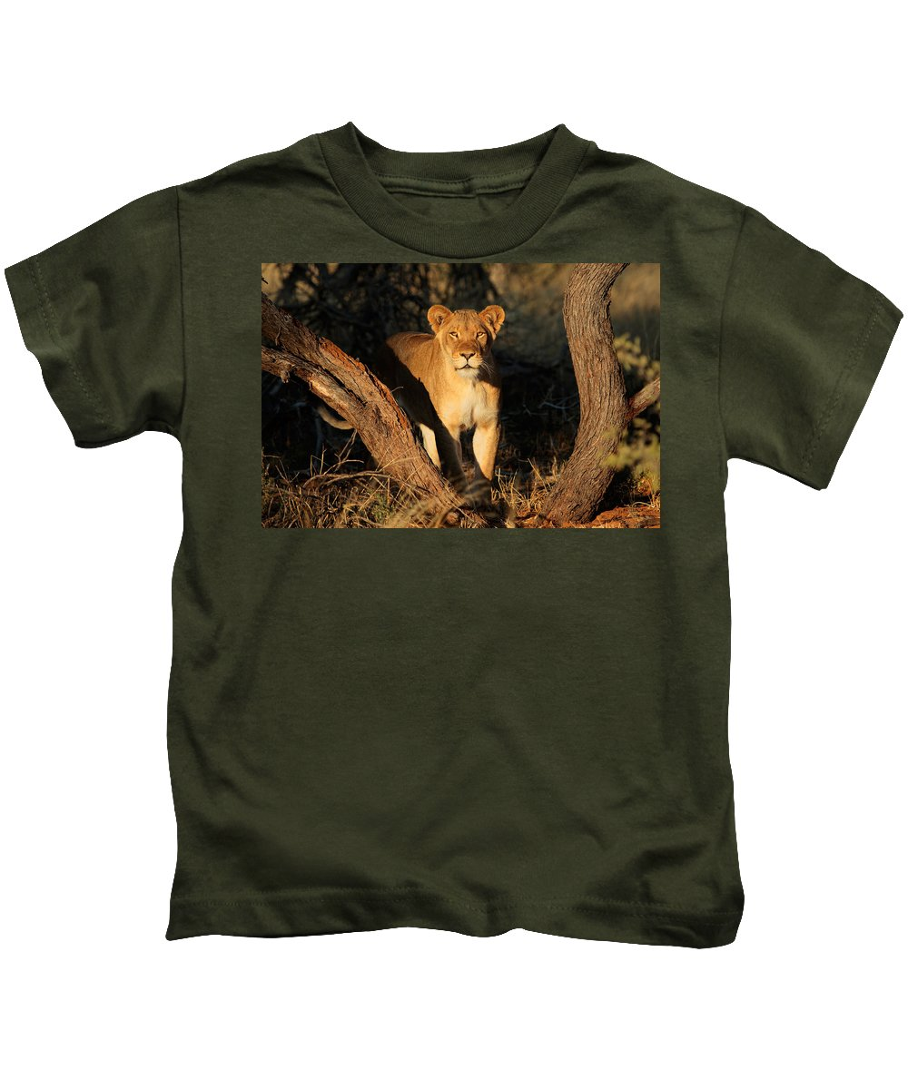 Lion Kids T-Shirt featuring the digital art Lion by Dorothy Binder