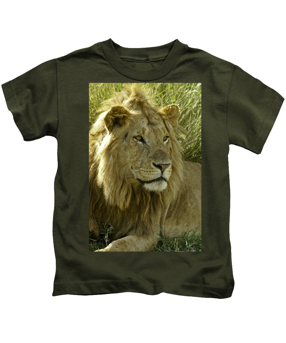 Lion Kids T-Shirt featuring the photograph Nice Kitty by Michele Burgess