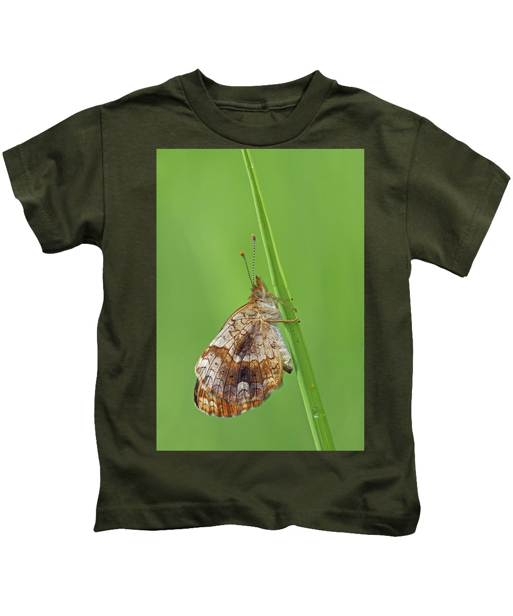 Pearl Crescent Kids T-Shirt featuring the photograph Pearl Crescent by Jim Zablotny