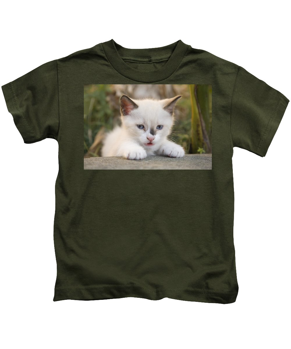 Animal Kids T-Shirt featuring the photograph Cute 2 Month Old White Kitten by Ian Middleton