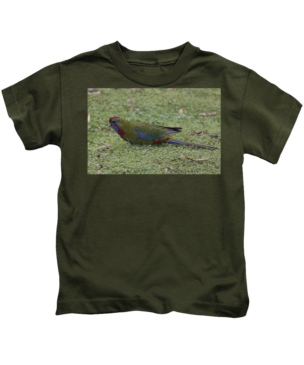 Bird Kids T-Shirt featuring the photograph Juvenile Crimson Rosella by Masami Iida
