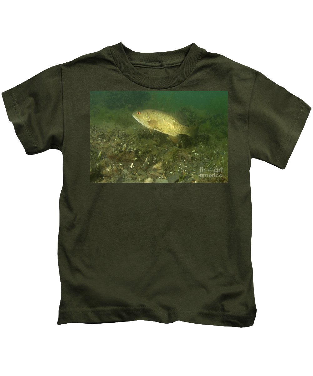 Smallmouth Bass Kids T-Shirt featuring the photograph Smallmouth Bass Protecting Eggs by Ted Kinsman