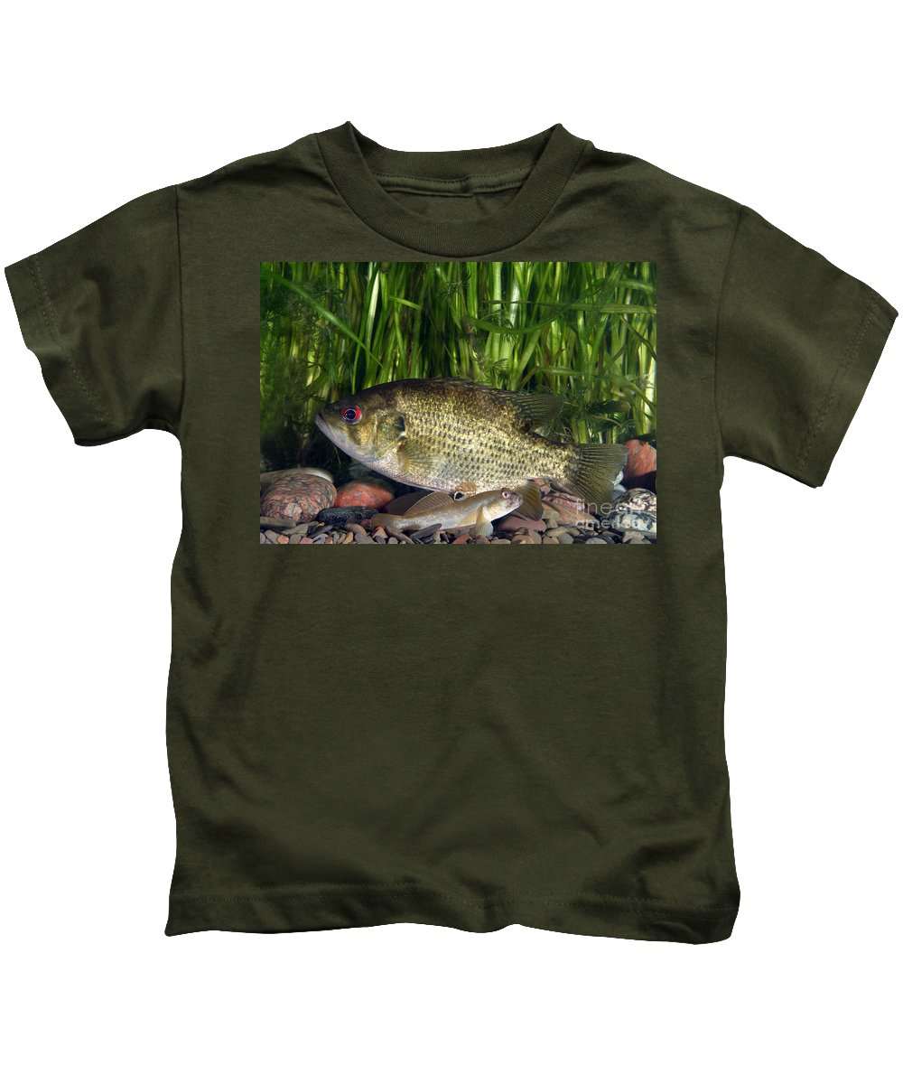 Animal Kids T-Shirt featuring the photograph Rock Bass by Ted Kinsman