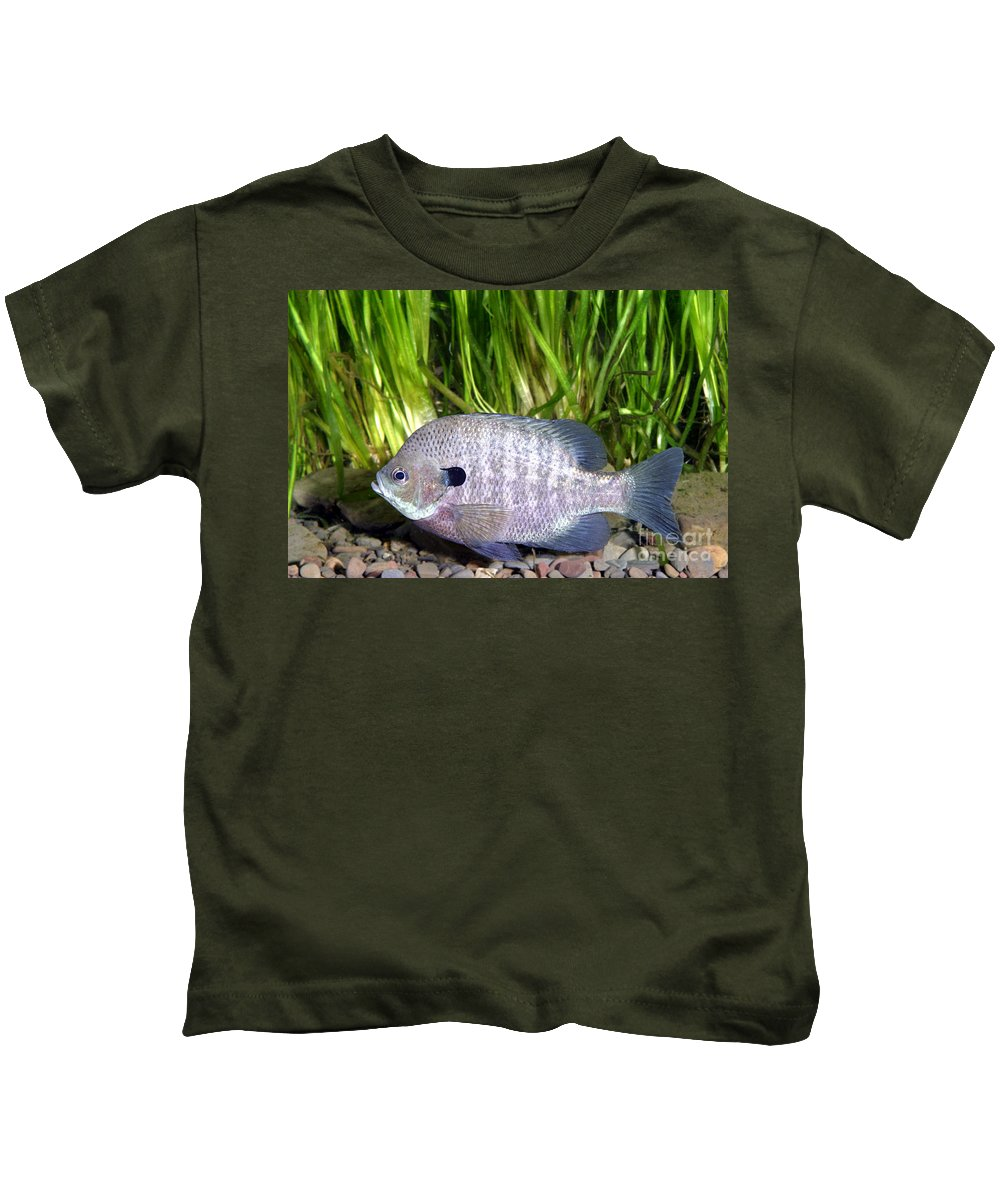 Freshwater Kids T-Shirt featuring the photograph Bluegill Lepomis Macrochirus by Ted Kinsman