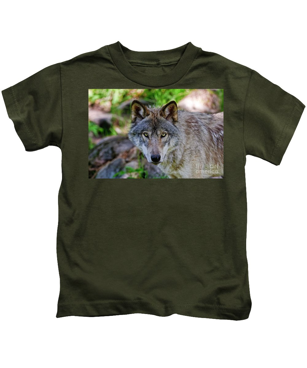 Michael Cummings Kids T-Shirt featuring the photograph Timber Wolf by Michael Cummings