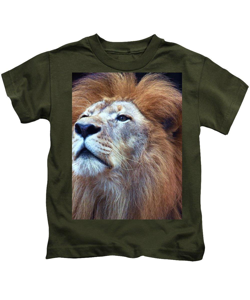 Wildlife Kids T-Shirt featuring the photograph African Lion by Randy Matthews