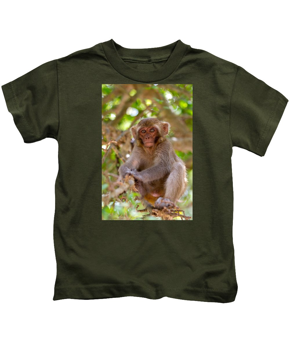 Dara Gor Kids T-Shirt featuring the photograph Baby Monkey by Dara Gor