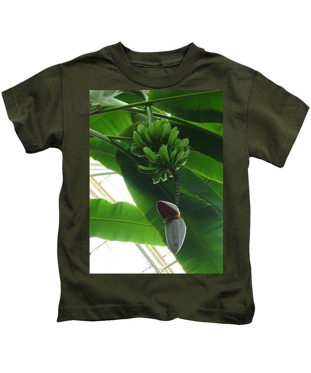 Kew Kids T-Shirt featuring the photograph Banana Plant Kew London England by Heather Lennox