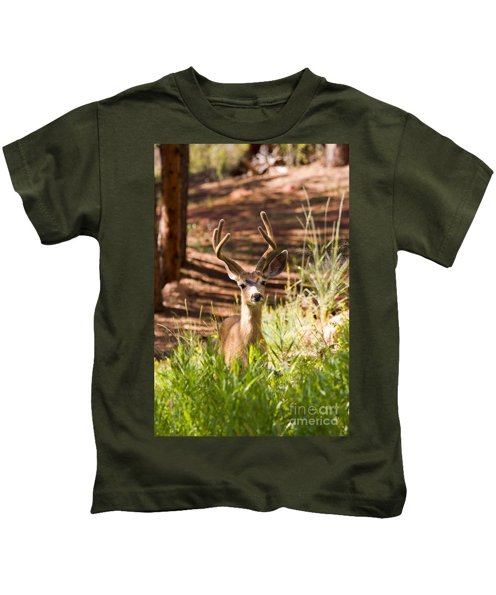 Deer Kids T-Shirt featuring the photograph Beautiful Buck Deer In The Pike National Forest by Steve Krull