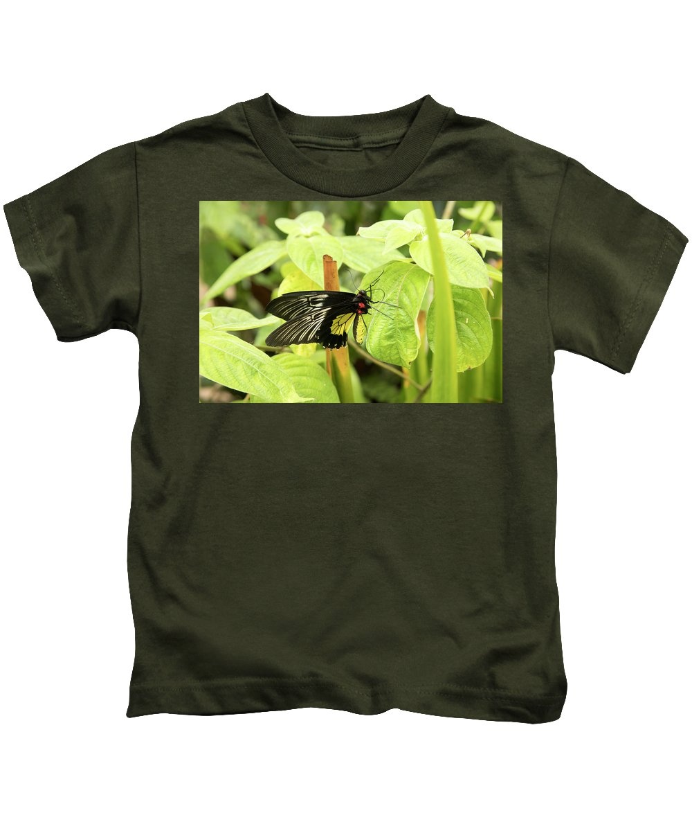 Black Kids T-Shirt featuring the photograph Black And Yellow Butterfly by Karen Foley