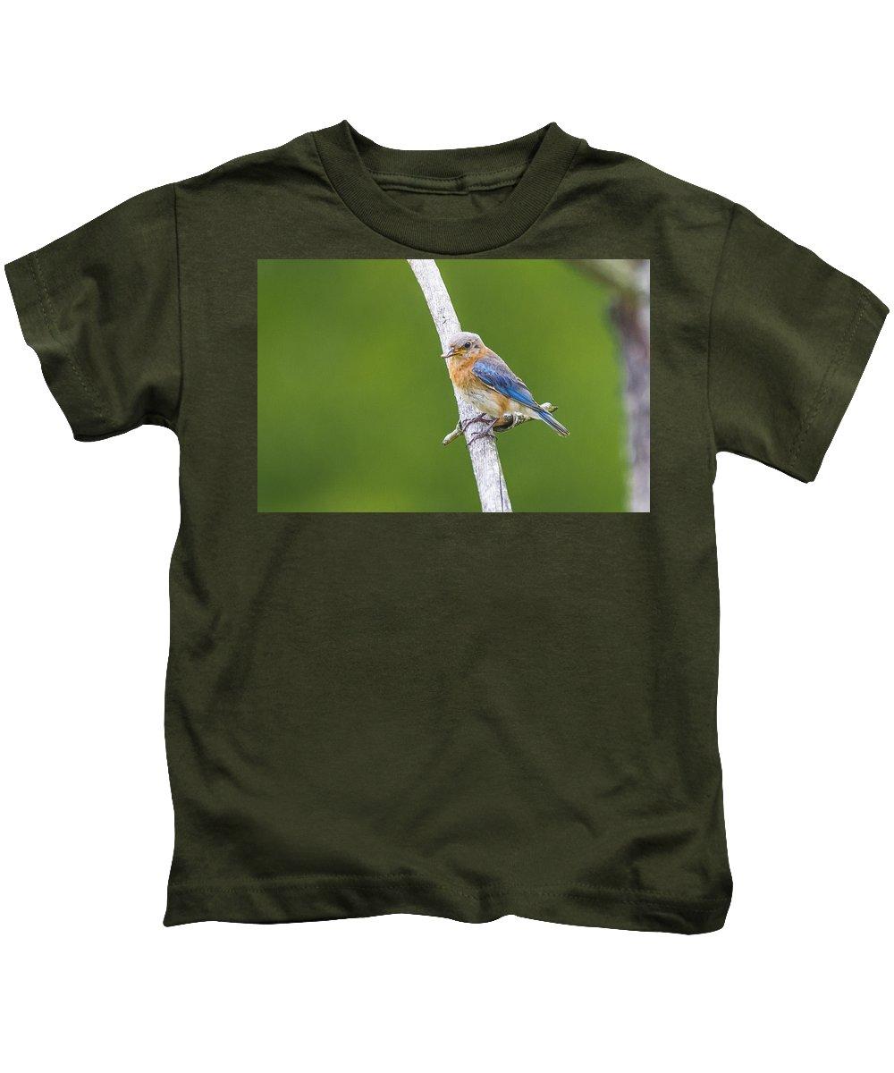 Bluebird. Nature Kids T-Shirt featuring the photograph Bluebird by Douglas Neumann
