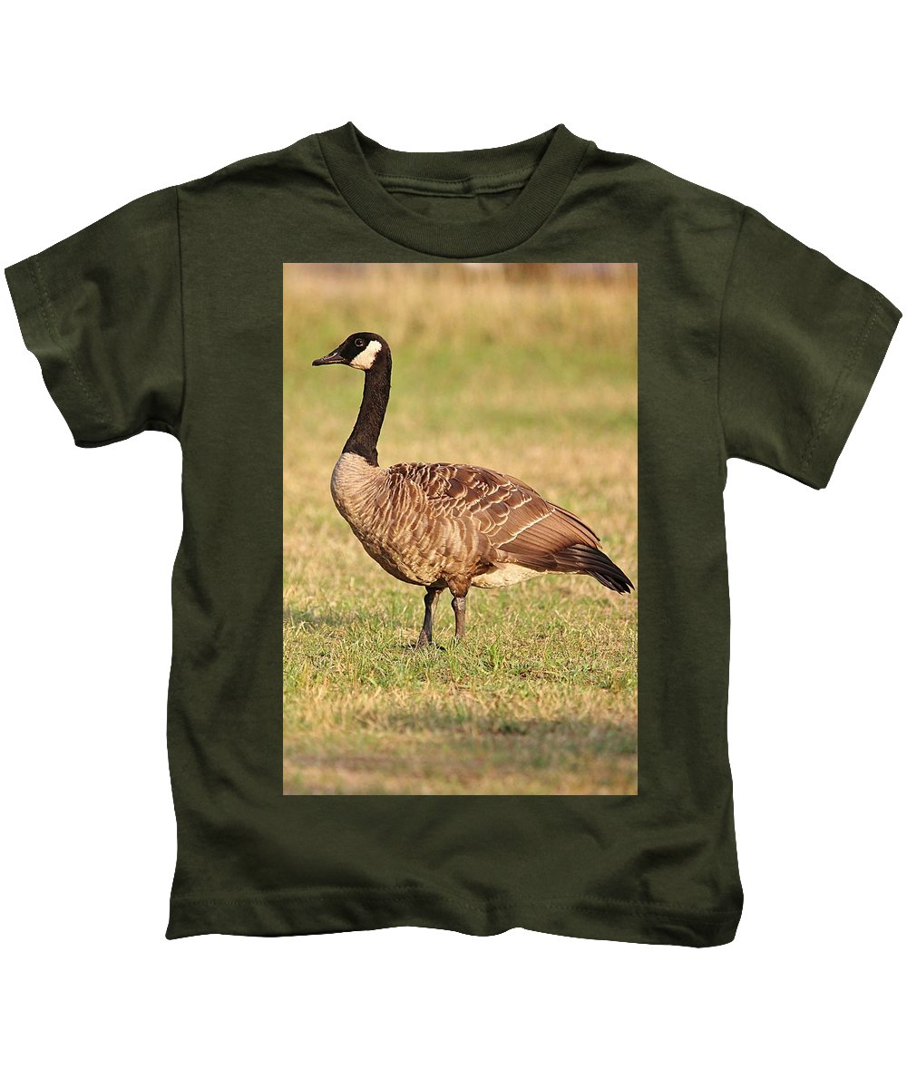 A Very Handsome Canada Goose Or Gander Stands For A Portrait Just Before Sunset. Kids T-Shirt featuring the photograph Canada Geese by Linda Crockett
